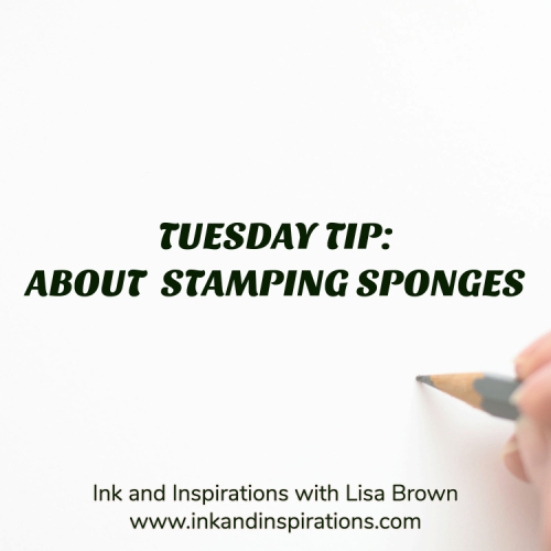 Sponges.blog-post-image
